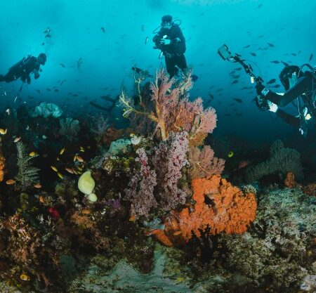 divers-taking-pictures-reef_1360-15